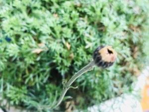 いつもと違う花々